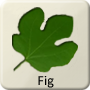 Celtic Tree - Fig